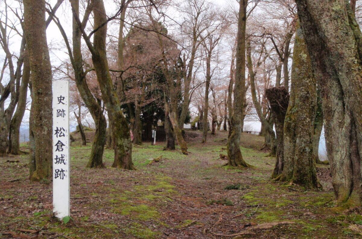 県内最大級の連郭式山城跡
