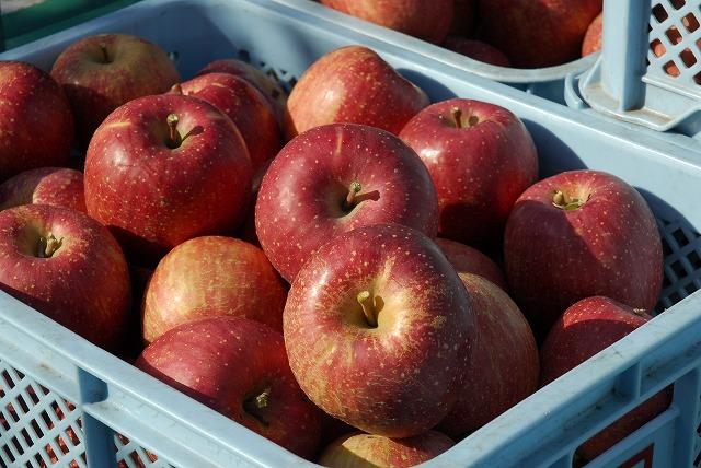 【りんごの種類と収穫時期】
